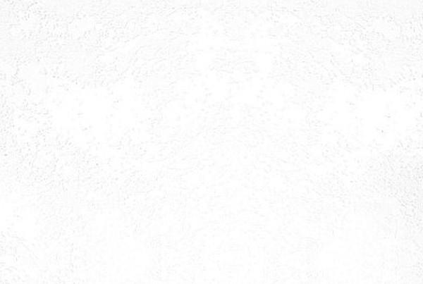 <b>897S</b>  tesoro bianco